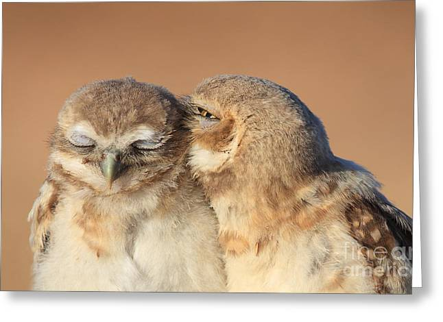 Owl Love Greeting Card by Gary Michael Flanagan