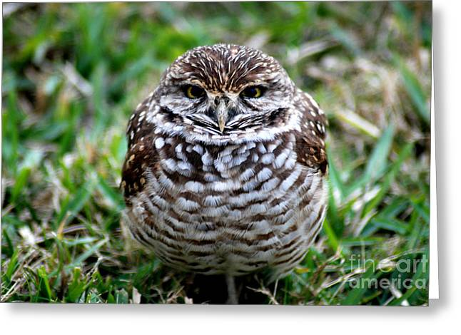 Owl. Best Photo Greeting Card