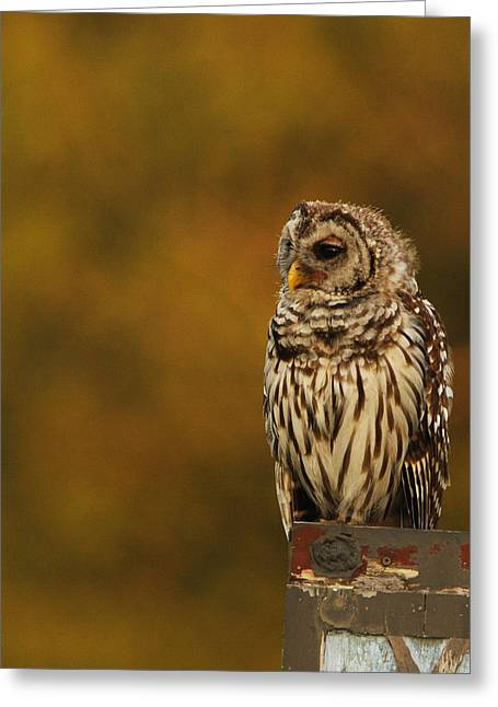 Owl On A Fence Greeting Card