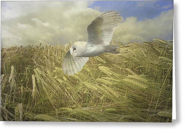 Owl On The Prowl Greeting Card by Roy  McPeak