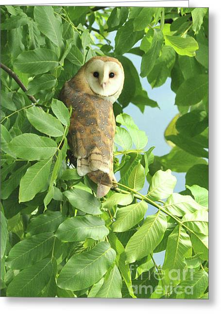 Greeting Card featuring the photograph owl by Rod Wiens