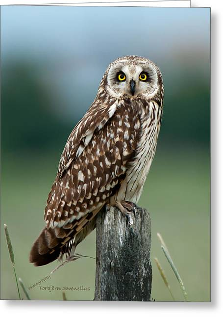 Owl See You Greeting Card