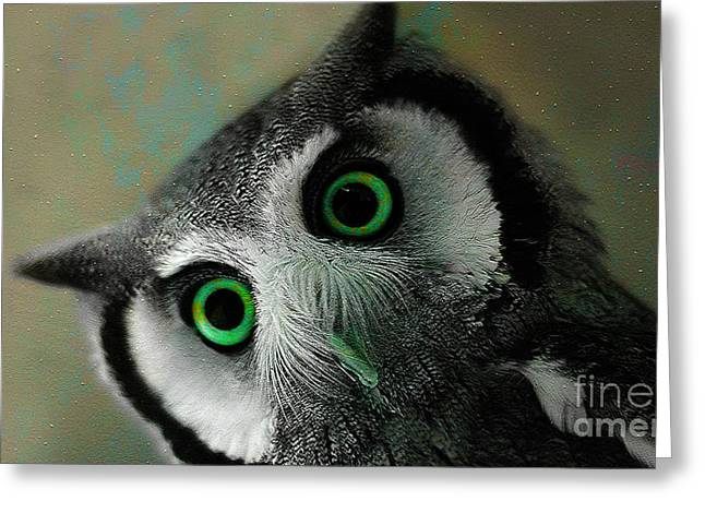 Owl Who Greeting Card