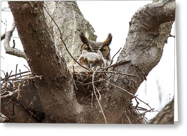 Owlet And Mom Greeting Card