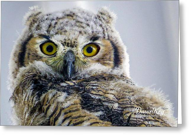 Owlet Close-up Greeting Card