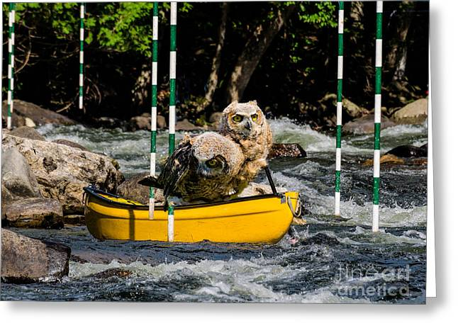Owlets In A Canoe Greeting Card by Les Palenik