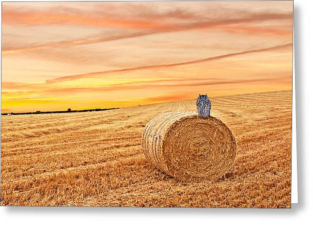 Owl's Harvest Supper - Square Greeting Card by Gill Billington