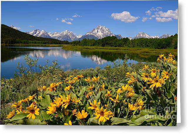 Oxbow Bend Splendor Greeting Card by Johanne Peale