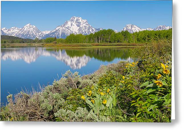 Greeting Card featuring the photograph Oxbow Bend Wildflowers In Spring by Aaron Spong