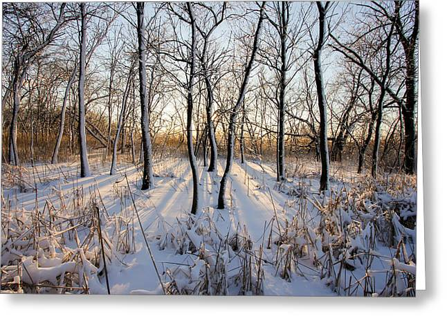 Oxbow Park Golden Hour Greeting Card by Jackie Novak