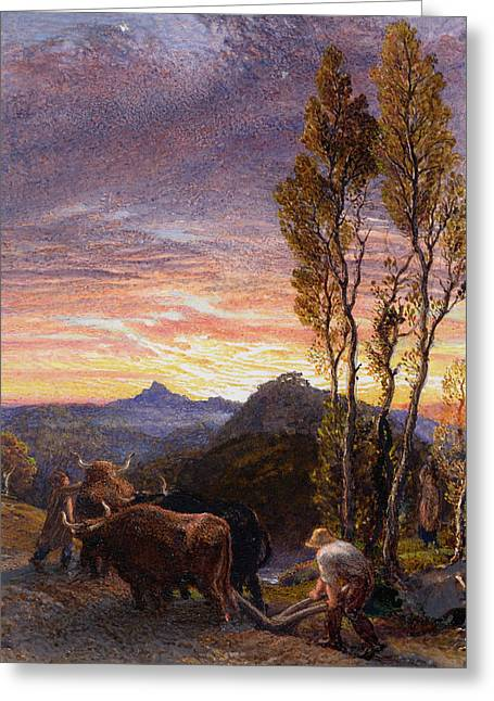 Oxen Ploughing At Sunset Greeting Card