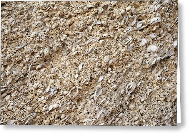 Oyster Beds In Cliff Greeting Card by Jon Wilson