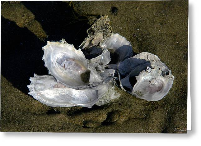 Oyster Collage Greeting Card by Michael Friedman