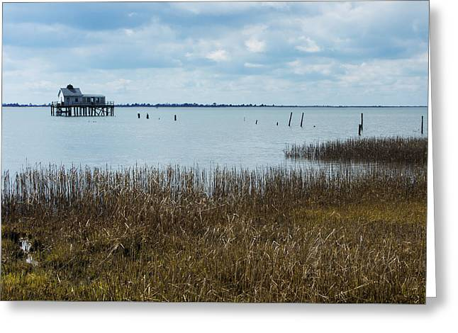 Oyster Shack And Tall Grass Greeting Card