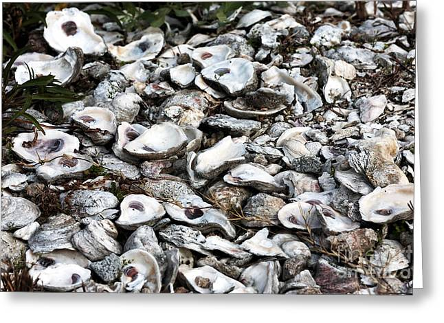 Oyster Shells Greeting Card by John Rizzuto