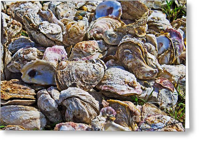 Oysters 02 Greeting Card