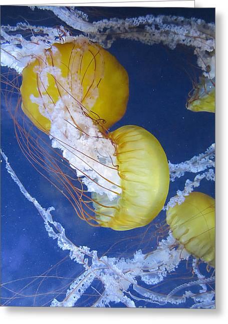 Pacfic Jellyfish Greeting Card