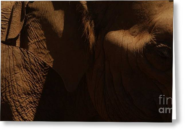 Pachyderm Panorama Greeting Card by Anna Lisa Yoder