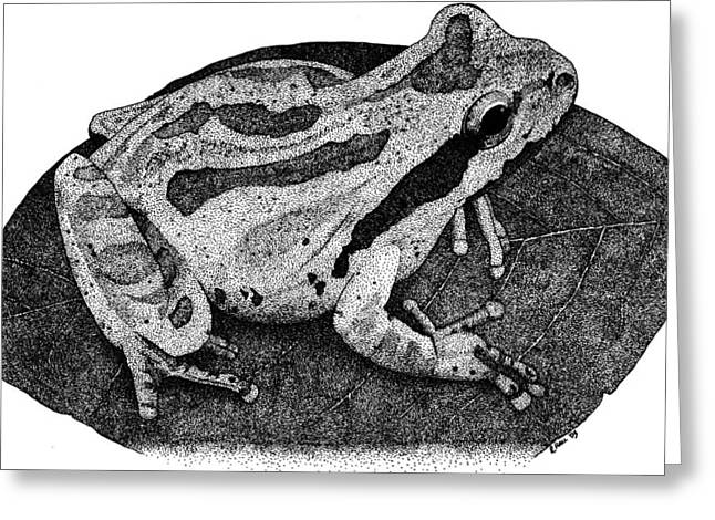 Pacific Chorus Frog Greeting Card by Roger Hall