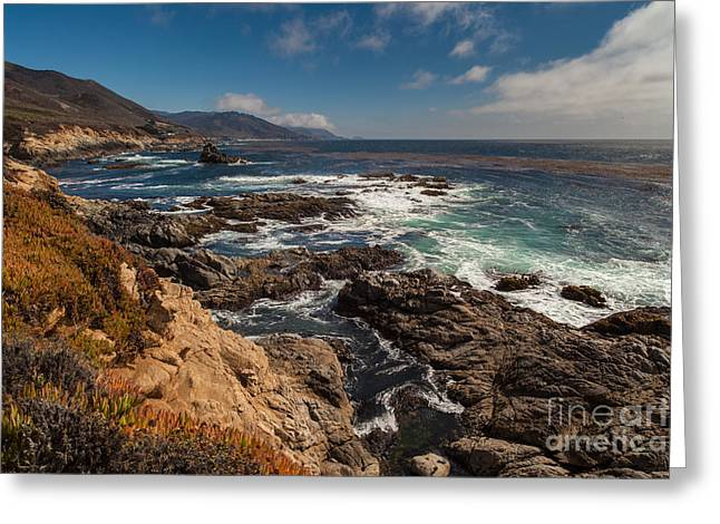 Pacific Coast Life Greeting Card by Mike Reid