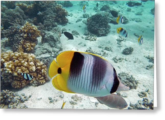Pacific Double-saddle Butterflyfish Greeting Card