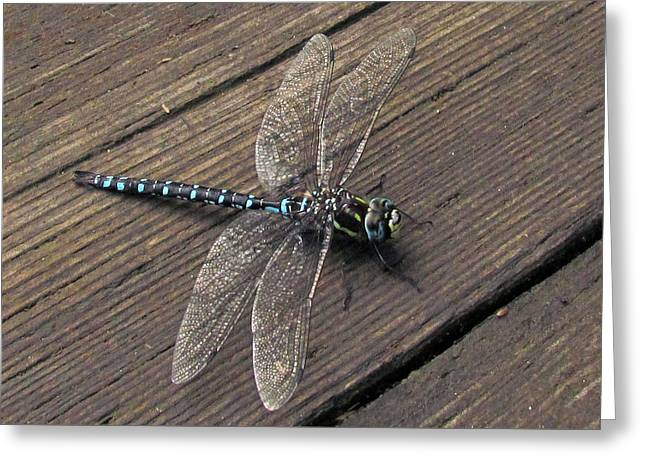 Pacific Forktail Greeting Card