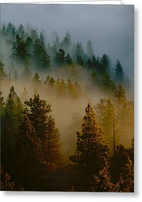 Pacific Northwest Morning Mist Greeting Card