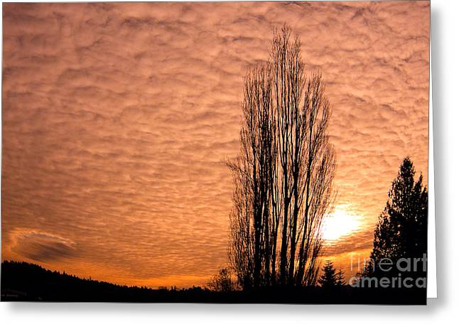 Pacific Northwest Winter's Sky Greeting Card