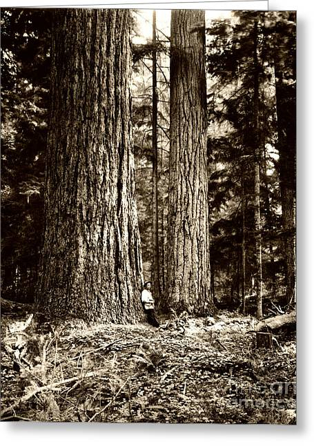 Pacific Old Growth Forest Greeting Card