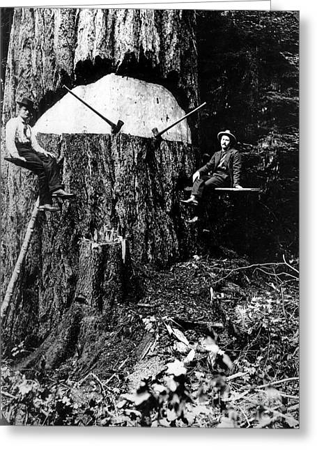 Pacific Old Growth Tree And Fallers Greeting Card