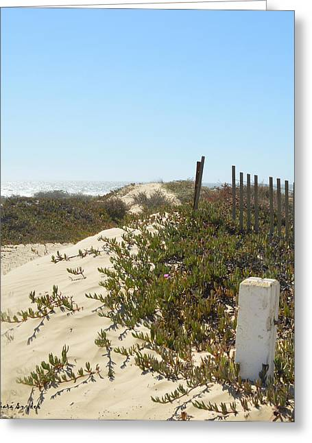 Pacific Pathway Greeting Card by Barbara Snyder