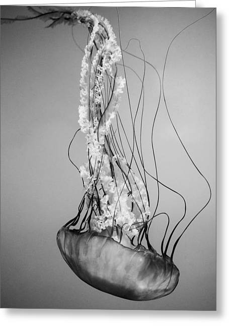 Pacific Sea Nettle - Black And White Greeting Card