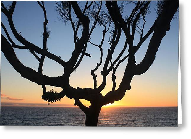 Pacific Tree Sunset Greeting Card