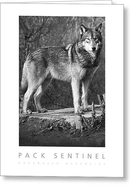Pack Sentinel Naturally Defensive Poster Greeting Card by David Davies