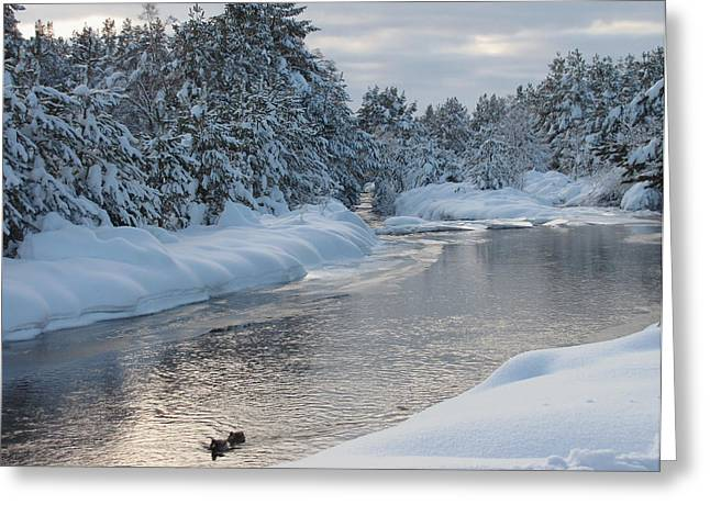Paddling Up The Snowy River Greeting Card by Jacqi Elmslie