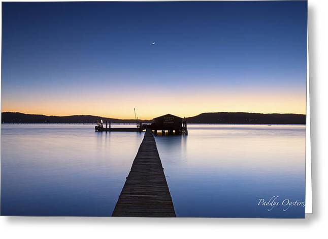 Paddys Oysters Greeting Card by Steve Caldwell