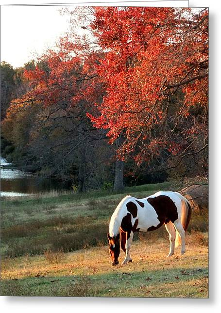 Paint Horse In The Fall Greeting Card