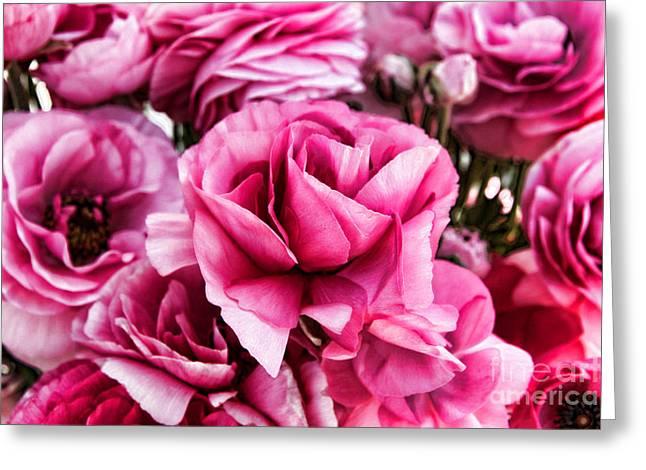 Paint Me Pink Ranunculus Flowers By Diana Sainz Greeting Card