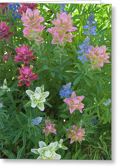 Paintbrush And Lupine, Alta Ski Resort Greeting Card by Howie Garber