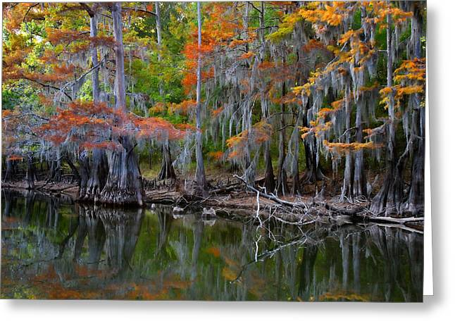 Painted Bayou Greeting Card by Lana Trussell