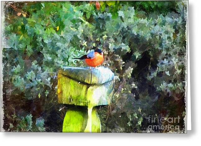 Painted Bullfinch S1 Greeting Card