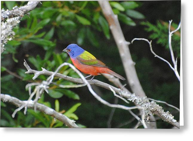 Painted Bunting Out On A Limb Greeting Card