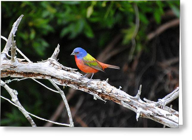 Painted Bunting Perched On Limb Greeting Card