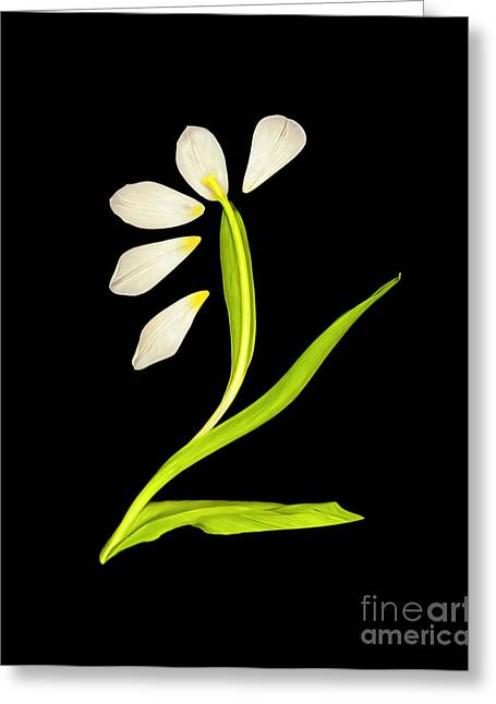 Painted Flower Petal Abstract Art-1  Greeting Card