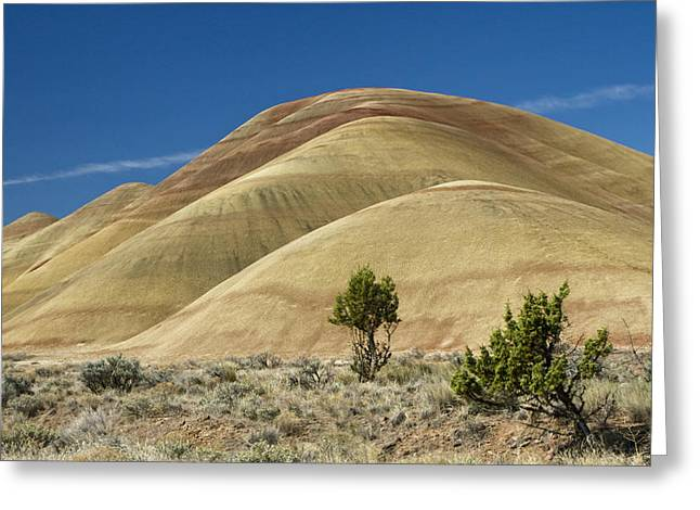Greeting Card featuring the photograph Painted Hills by Sonya Lang