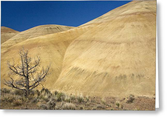 Greeting Card featuring the photograph Painted Hills Tree by Sonya Lang