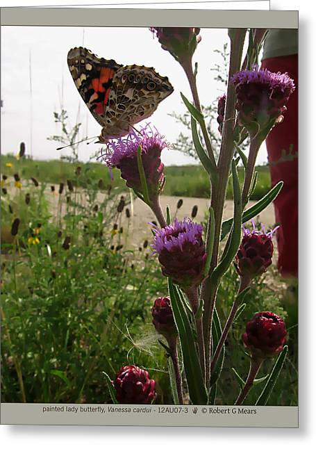 painted lady butterfly - Vanessa cardui - 12AU07-3 Greeting Card by Robert G Mears