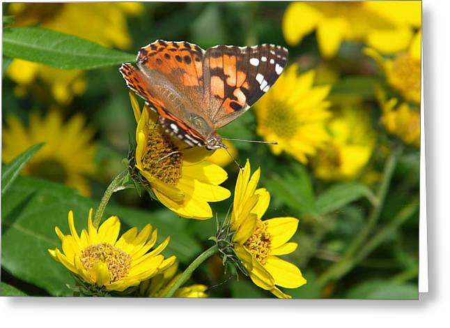Greeting Card featuring the photograph Painted Lady by James Peterson
