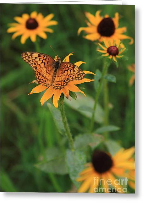 Painted Lady With Friends Greeting Card by Reid Callaway