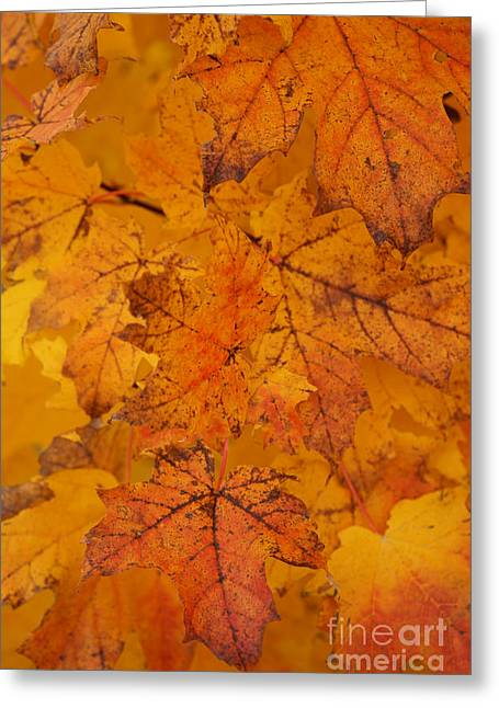 Greeting Card featuring the photograph Painted Leaves Of Autumn by Linda Shafer